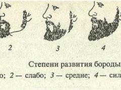 Стадии роста бороды: следим за ростом волос