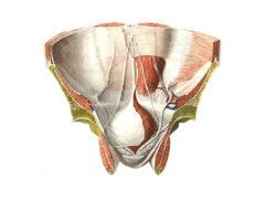 Что такое паховый канал с точки зрения анатомии?